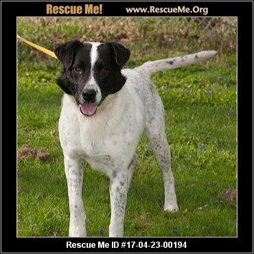 Moundsville Dog Rescue