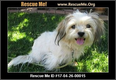 maltese rescue california california maltese rescue adoptions rescueme org 4484