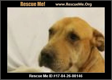 Arizona Pit Bull Rescue ― Adoptions ― Rescueme Org