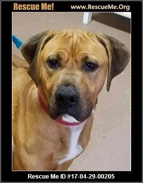 Mastiff Dogs For Adoption Minnesota