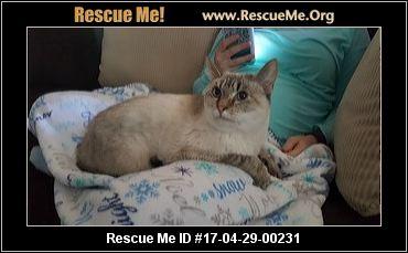 Persian cat rescue dallas fort worth