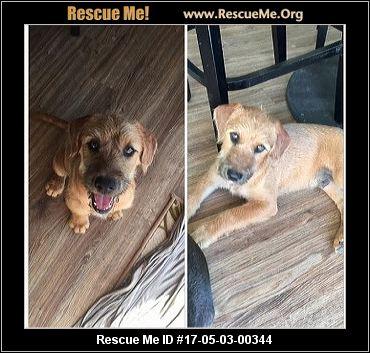 North Carolina Doberman Pinscher Rescue ― Adoptions