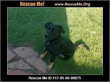 Dog Rescue Okc Ok