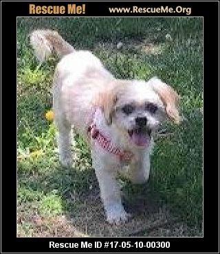 Good Dog Rescue Ottawa Adoption Fee