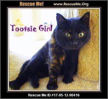 Virginia Cat Rescue ― Adoptions ― Rescueme Org