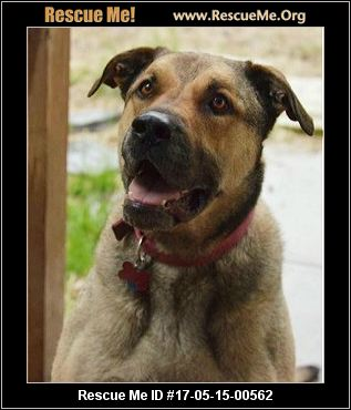 Iowa Dog Rescue ― Adoptions ― Rescueme Org