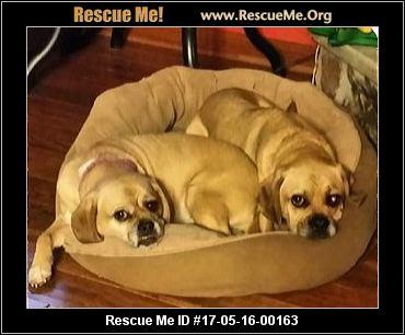 Good Bones Dog Rescue Location