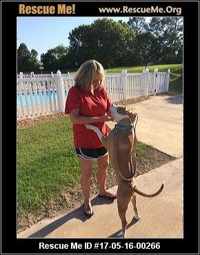 Alabama Dog Rescue ― Adoptions ― Rescueme Org