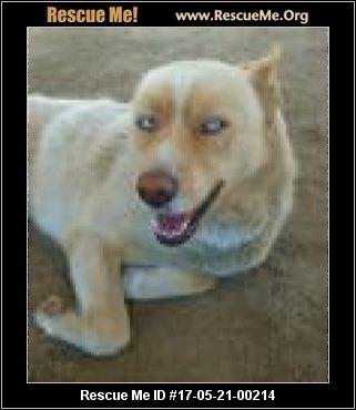 California Siberian Husky Rescue ― Adoptions ― Rescueme Org