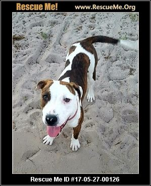 Animal Rescue Fort Myers Beach
