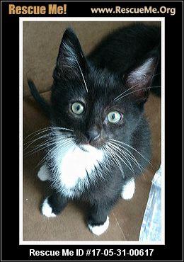 Cat Adoption Essex County Nj
