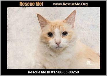 Maine Coon Cat Rescue Orange County Ca