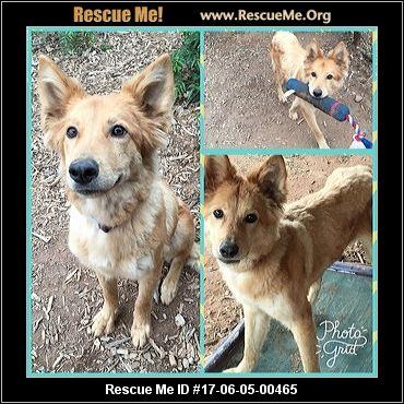California Golden Retriever Rescue ― ADOPTIONS ― RescueMe.Org