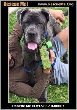 Iresq Dog Adoption