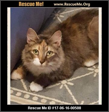 North Carolina Maine Coon Rescue ― Adoptions ― Rescueme Org