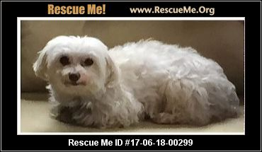 Maltese Dog Rescue Columbus Ohio
