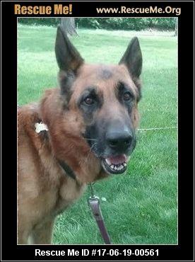 Dog Rescue Milwaukee