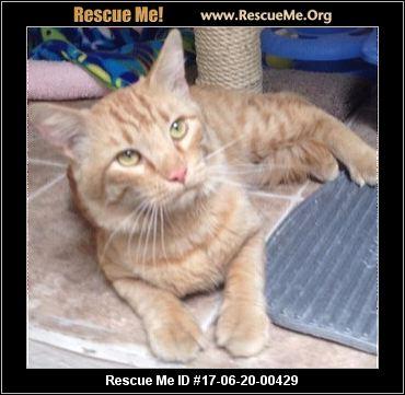 Arizona Small Dog Rescue Kitten Foster Application