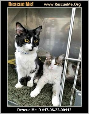 Maine coon rescue blairstown nj