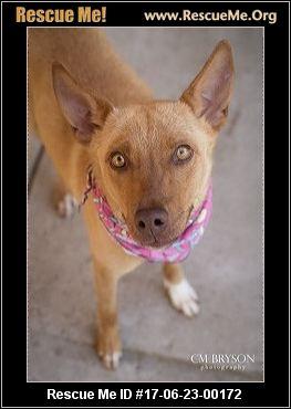 Humane Society Of Morgan County Madison Ga Rescue Animals