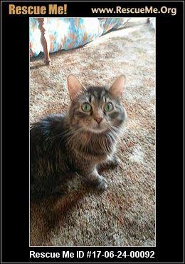 Crazy Cats Rescue Cincinnati