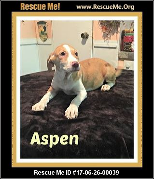 Maine Dog Rescue ― Adoptions ― Rescueme Org