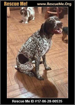 Florida German Shorthaired Pointer Rescue ― Adoptions