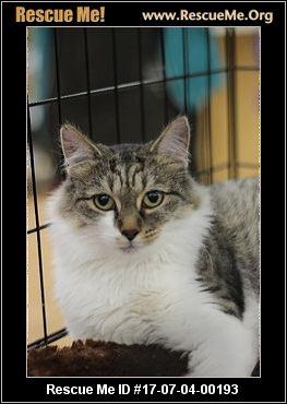 Cat Rescue Culpeper Va