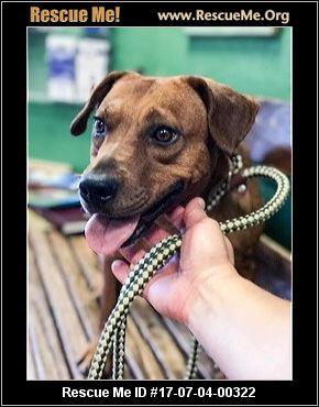 Street Dog Rescue Portland Oregon