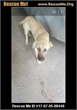 Texas Black Mouth Cur Rescue ― Adoptions ― Rescueme Org