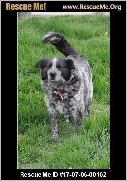 Dog Rescue Alexandria Va
