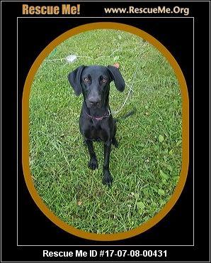 Dog Rescue Wausau Wi
