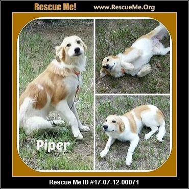 Aggressive Dog Rescue Arkansas