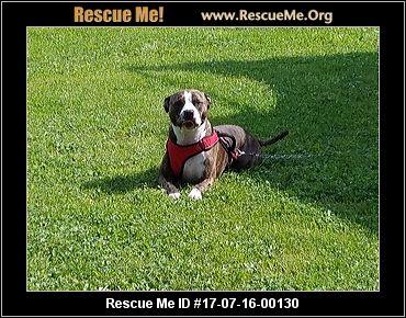 Brown Dog Rescue Waunakee Wisconsin