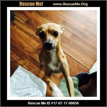 Eol Multi Breed Dog Rescue