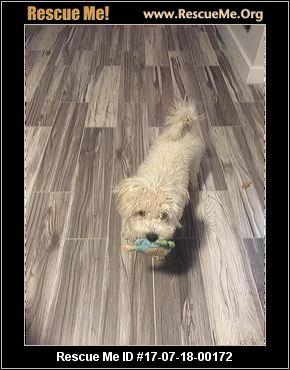Arizona Small Dog Rescue Tucson Facebook