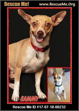 chihuahua rescue wisconsin wisconsin chihuahua rescue adoptions rescueme org 4802