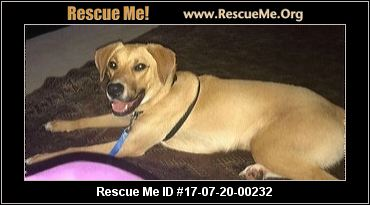 Love Mutts Rescue Raleigh Nc Rescue Animals
