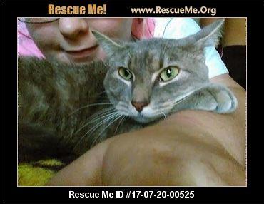 Persian cat rescue arkansas