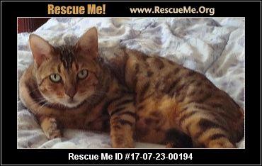 Bengal cat rescue sacramento