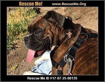 Yelm Dog Rescue