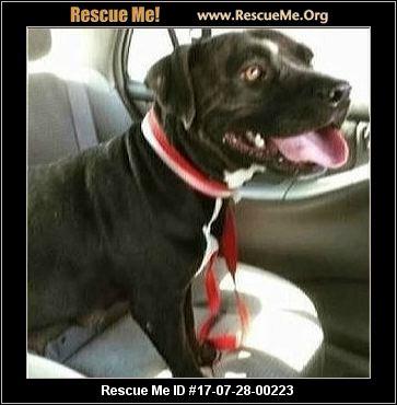 Forever Home Pet Rescue South Long Beach