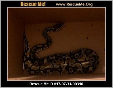 New York Reptiles Amp More Rescue ― Adoptions ― Rescueme Org