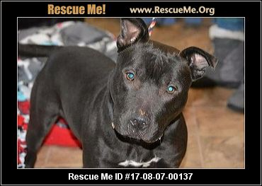 Indiana Dog Rescue ― Adoptions ― Rescueme Org