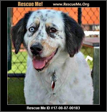 Florida Australian Shepherd Rescue ― ADOPTIONS ― RescueMe.Org South Florida Australian Shepherd Rescue