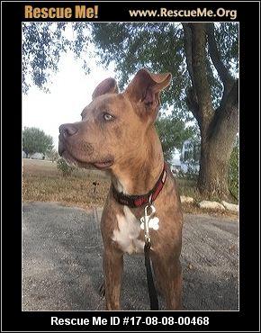 Texas Boxer Rescue ― Adoptions ― Rescueme Org