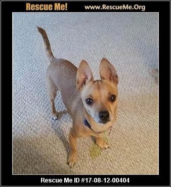 chihuahua rescue wisconsin wisconsin chihuahua rescue adoptions rescueme org 4723