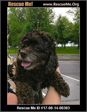 Rescue Dogs Auburn Wa
