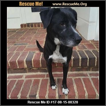 Lab Has Food Aggression Toward Other Dogs