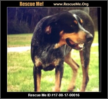 Sweet Water Valley Dog Rescue